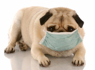 Canine Influenza Update April 2016